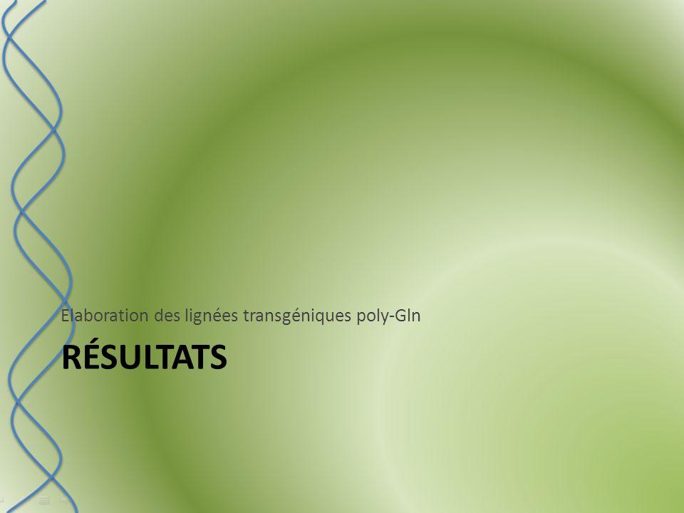 RÉSULTATS Elaboration des lignées transgéniques poly-Gln