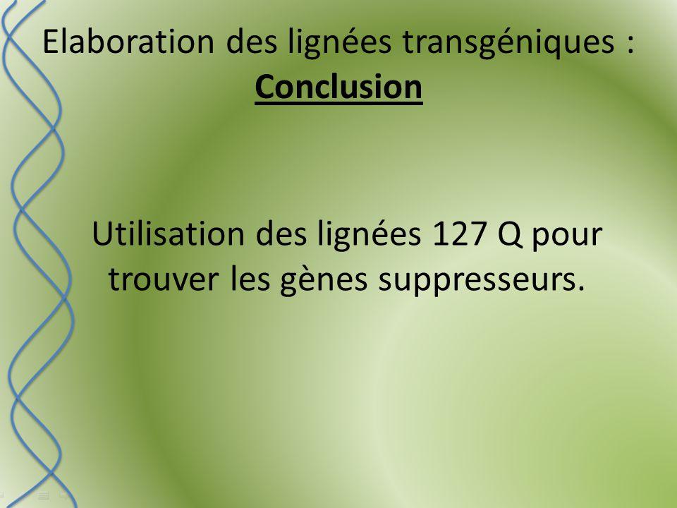 Elaboration des lignées transgéniques : Conclusion Utilisation des lignées 127 Q pour trouver les gènes suppresseurs.