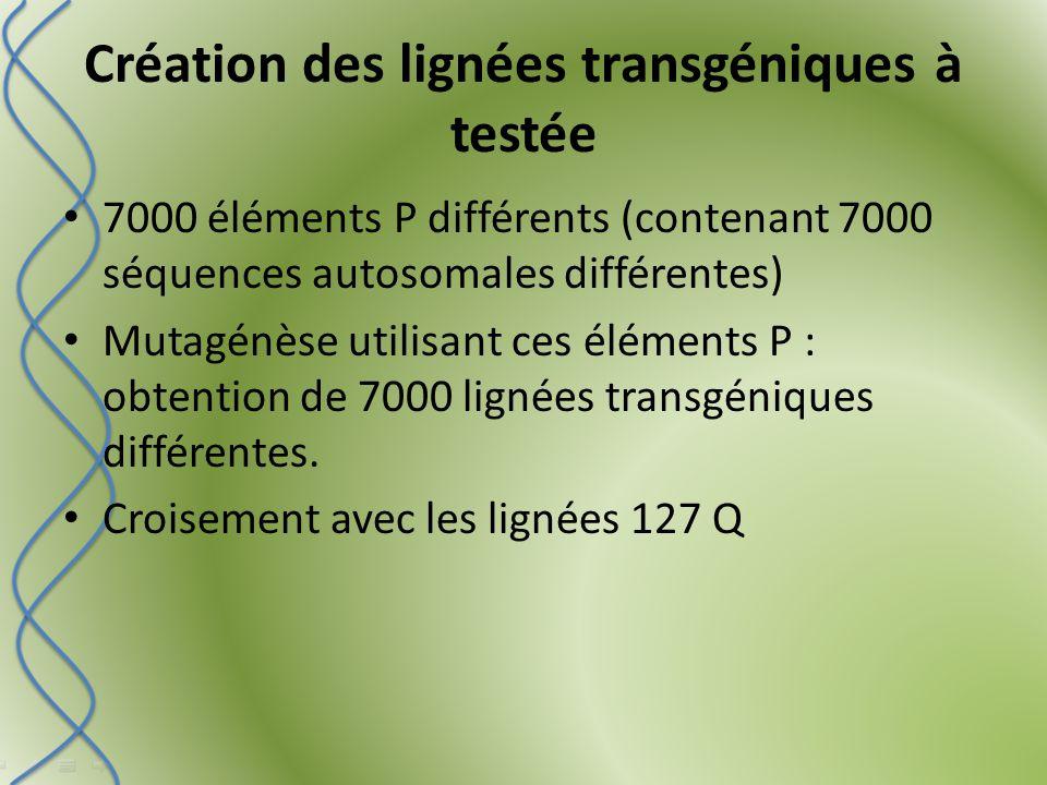 Création des lignées transgéniques à testée 7000 éléments P différents (contenant 7000 séquences autosomales différentes) Mutagénèse utilisant ces éléments P : obtention de 7000 lignées transgéniques différentes.