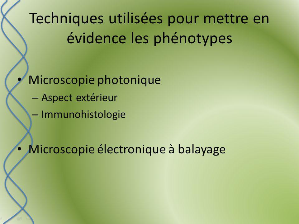 Techniques utilisées pour mettre en évidence les phénotypes Microscopie photonique – Aspect extérieur – Immunohistologie Microscopie électronique à balayage