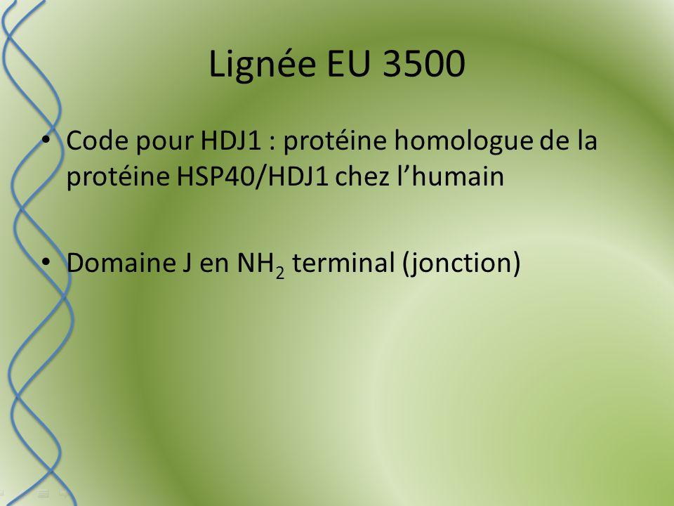 Code pour HDJ1 : protéine homologue de la protéine HSP40/HDJ1 chez l'humain Domaine J en NH 2 terminal (jonction)