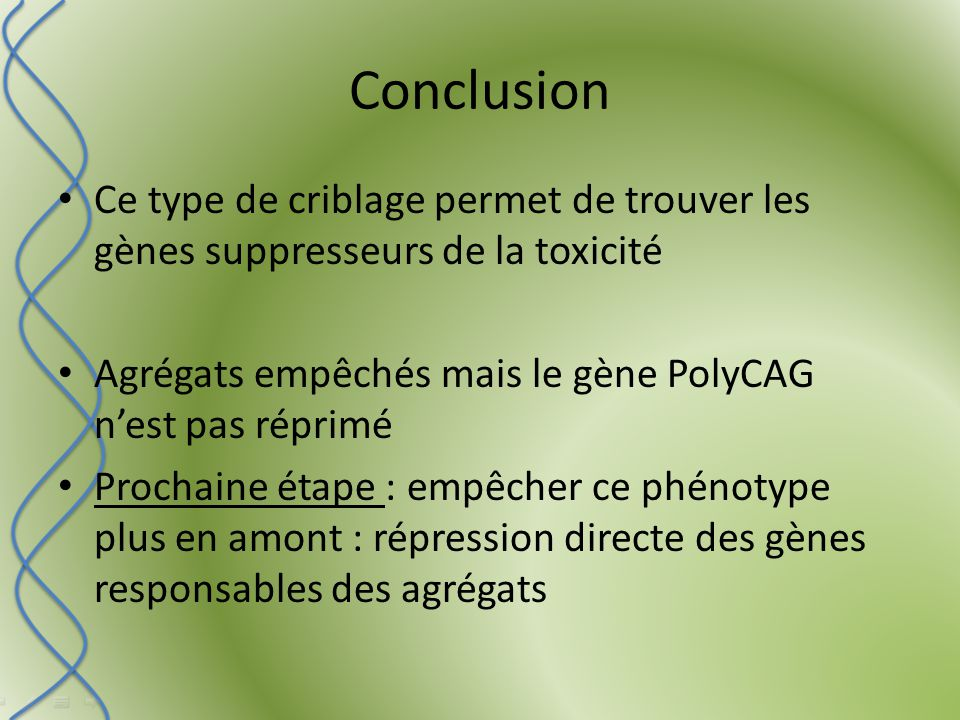 Conclusion Ce type de criblage permet de trouver les gènes suppresseurs de la toxicité Agrégats empêchés mais le gène PolyCAG n'est pas réprimé Prochaine étape : empêcher ce phénotype plus en amont : répression directe des gènes responsables des agrégats