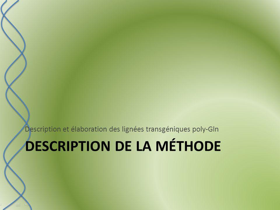 DESCRIPTION DE LA MÉTHODE Description et élaboration des lignées transgéniques poly-Gln