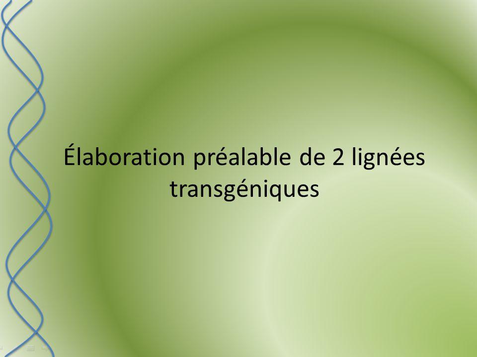 Élaboration préalable de 2 lignées transgéniques