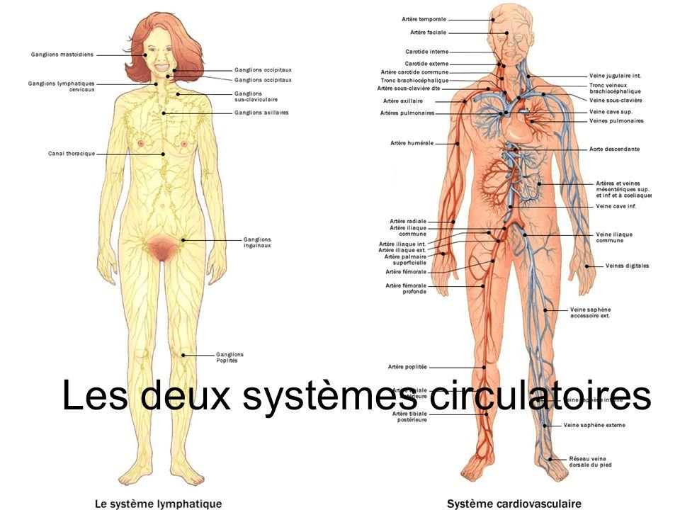 Les deux systèmes circulatoires