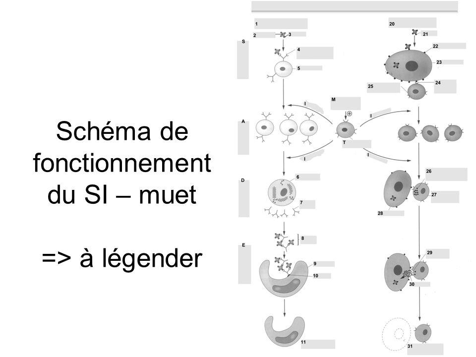Schéma de fonctionnement du SI – muet => à légender