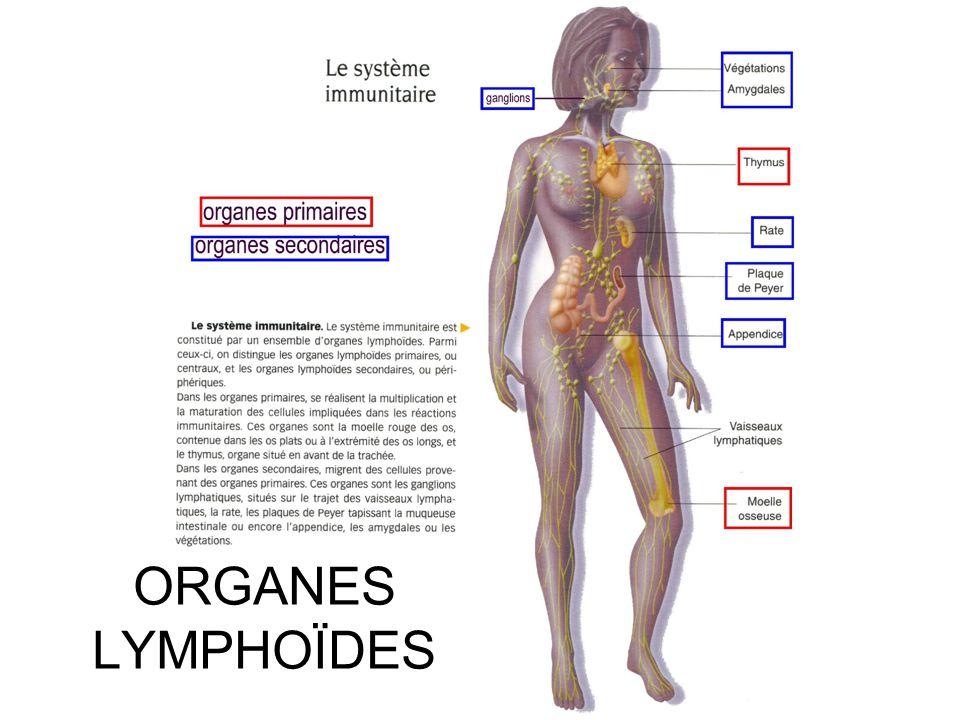MEB MET Les macrophages 1ers intervenants et éboueurs !