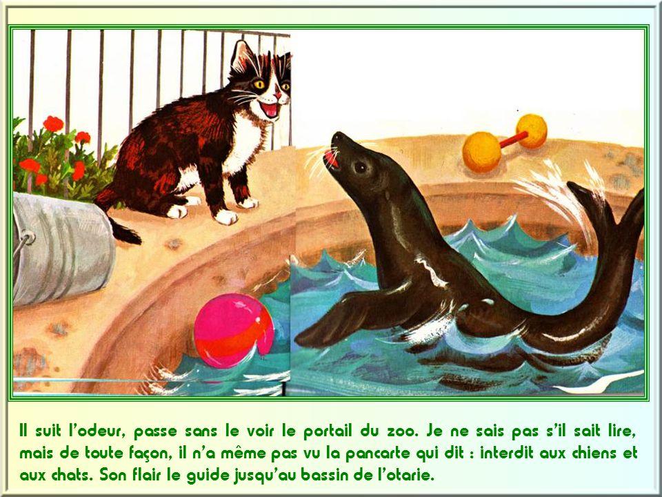 C'est un tout petit chaton.Un chaton affublé d'un nom interminable.