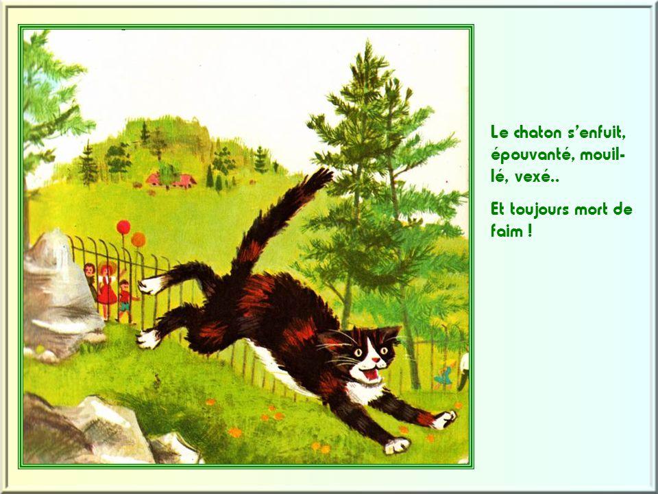 Le chaton s'enfuit, épouvanté, mouil- lé, vexé.. Et toujours mort de faim !