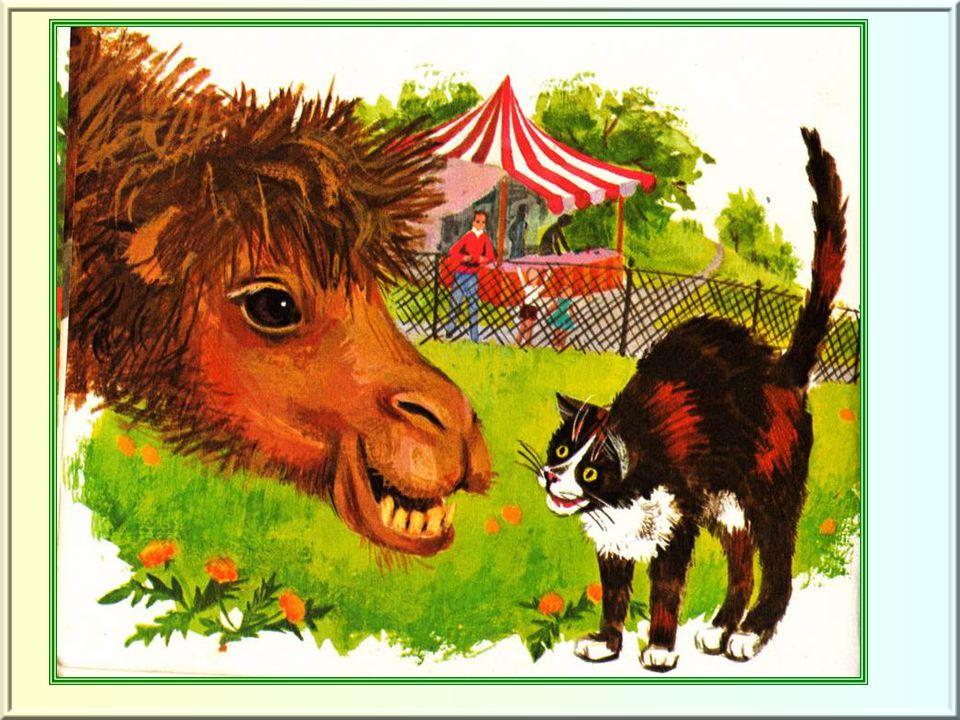 Il arrête sa course devant l'enclos d'étranges animaux.