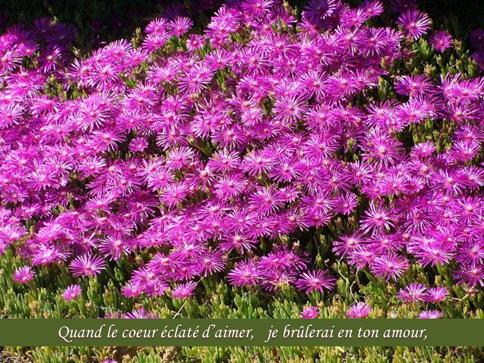 Quand le dernier soupir donné, je poserai mon âme en Toi, quand ma chair exténuée mourra…