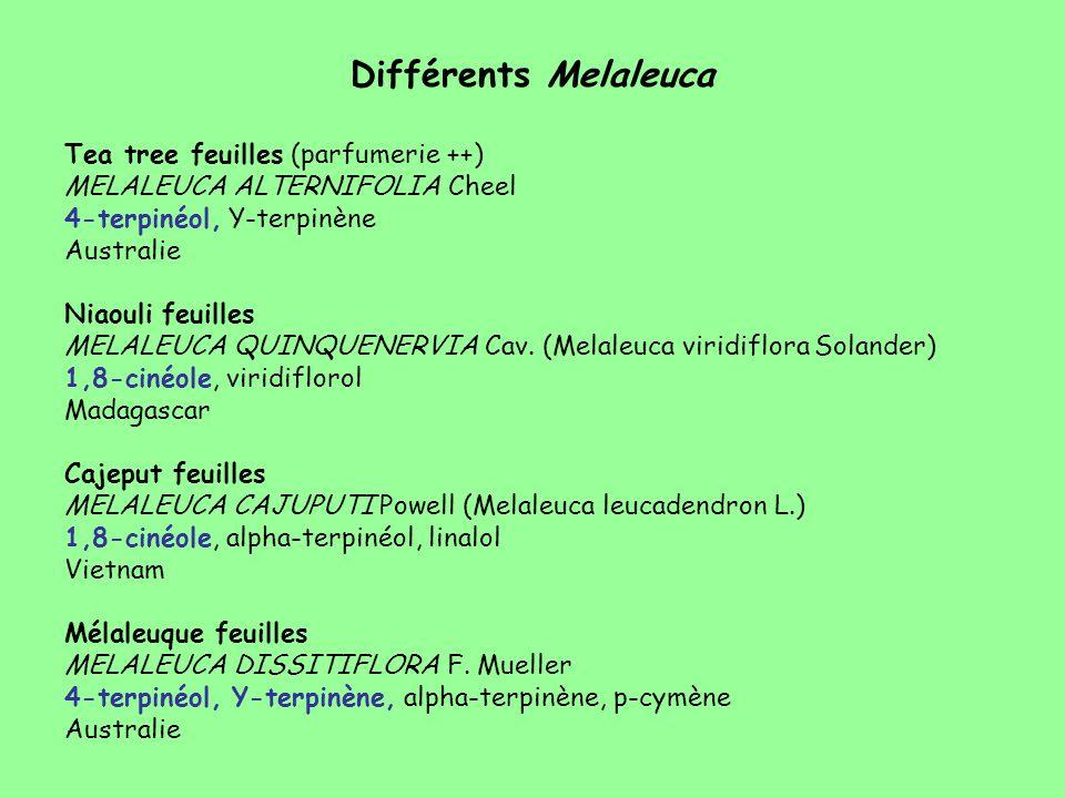 Différents Melaleuca Tea tree feuilles (parfumerie ++) MELALEUCA ALTERNIFOLIA Cheel 4-terpinéol, Y-terpinène Australie Niaouli feuilles MELALEUCA QUIN