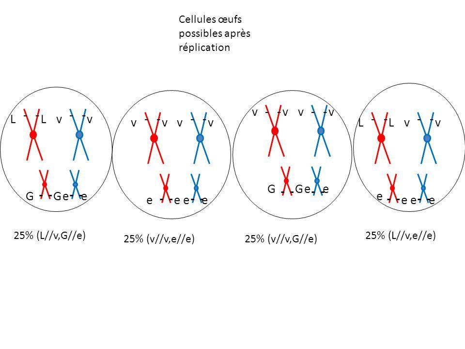 [L;G] Garniture chromosomique possible pour les individus issus du test cross L G v e × 2 [v;e] × 2 v e v e Phénotypes parentaux [v;G] v e v G × 2 [L;e] × 2 L e v e Phénotypes recombinés