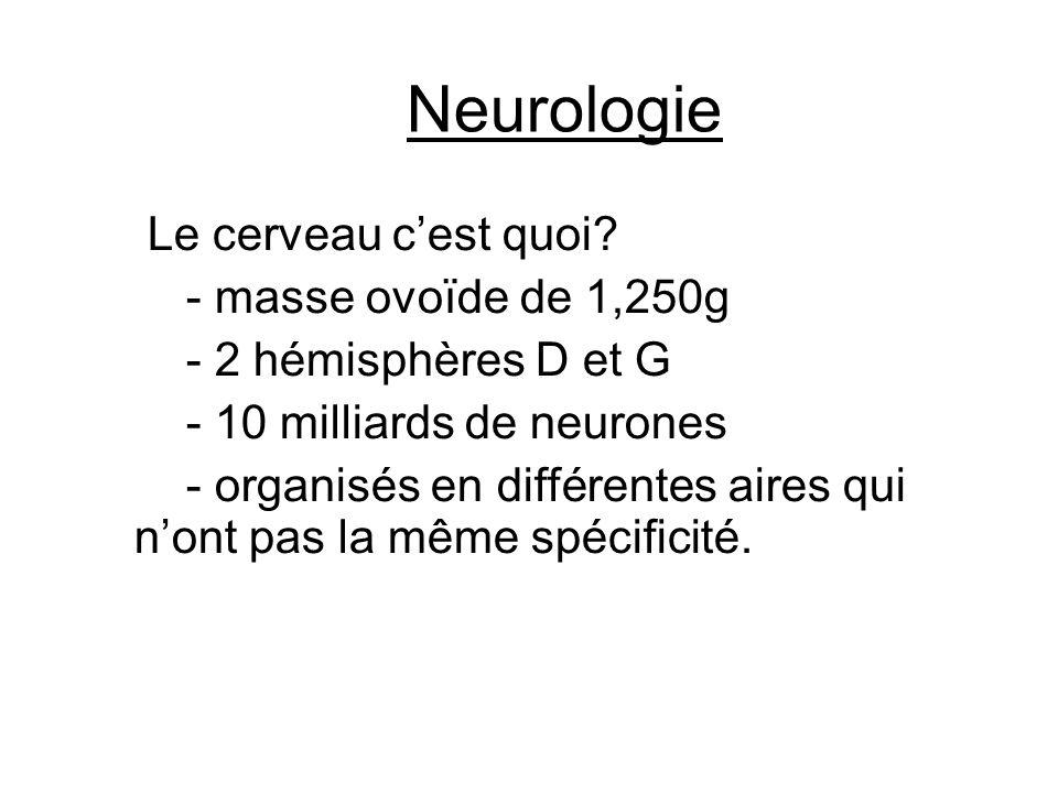 Neurologie Le cerveau c'est quoi? - masse ovoïde de 1,250g - 2 hémisphères D et G - 10 milliards de neurones - organisés en différentes aires qui n'on