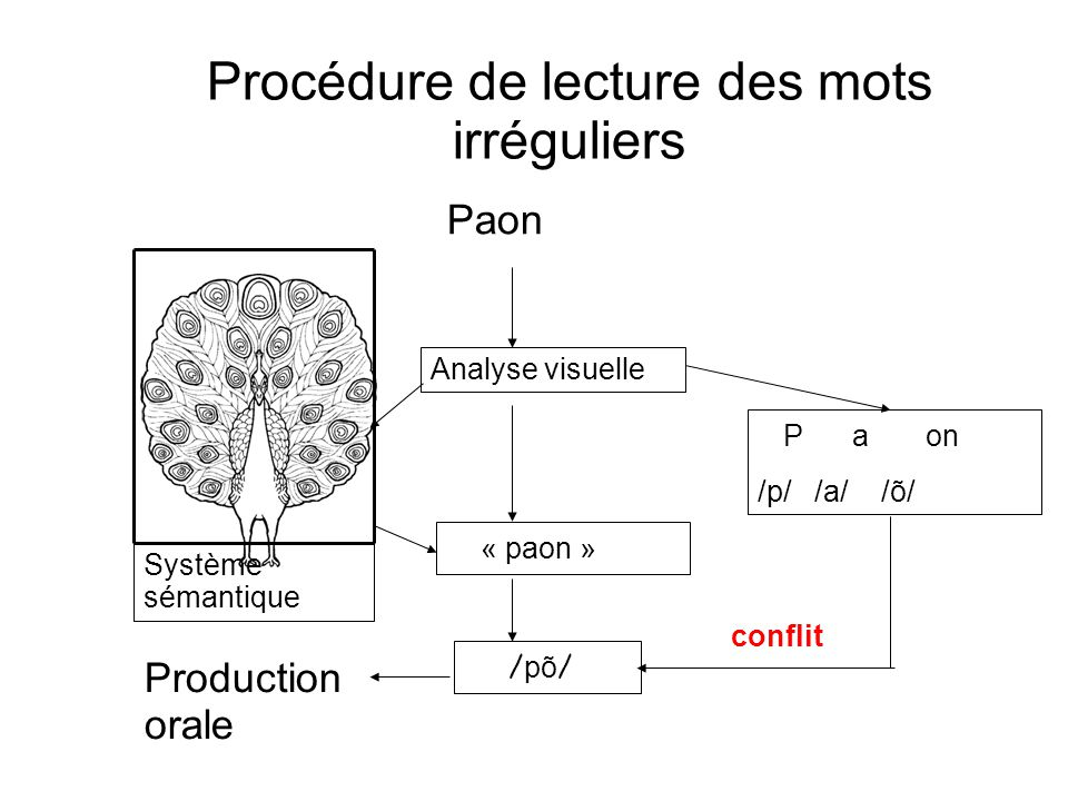 Procédure de lecture des mots irréguliers Paon Analyse visuelle « paon » P a on /p/ /a/ /õ/ / põ / Système sémantique conflit Production orale