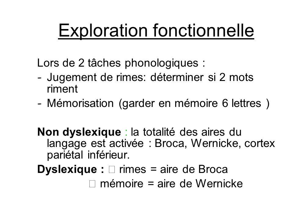 Exploration fonctionnelle Lors de 2 tâches phonologiques : - Jugement de rimes: déterminer si 2 mots riment - Mémorisation (garder en mémoire 6 lettre