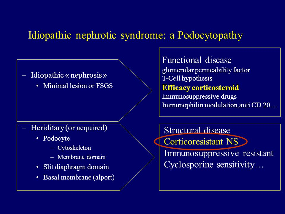 Idiopathic nephrotic syndrome: a Podocytopathy –Idiopathic « nephrosis » Minimal lesion or FSGS –Heriditary (or acquired) Podocyte –Cytoskeleton –Membrane domain Slit diaphragm domain Basal membrane (alport) Functional disease glomerular permeability factor T-Cell hypothesis Efficacy corticosteroid immunosuppressive drugs Immunophilin modulation,anti CD 20… Structural disease Corticoresistant NS Immunosuppressive resistant Cyclosporine sensitivity…