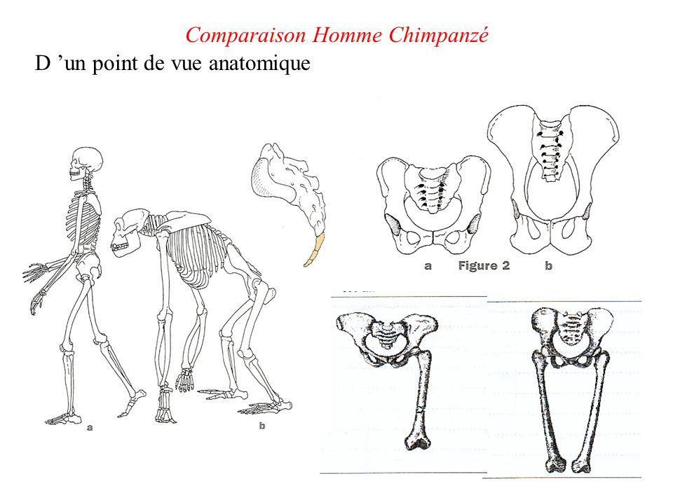 Comparaison crânienne