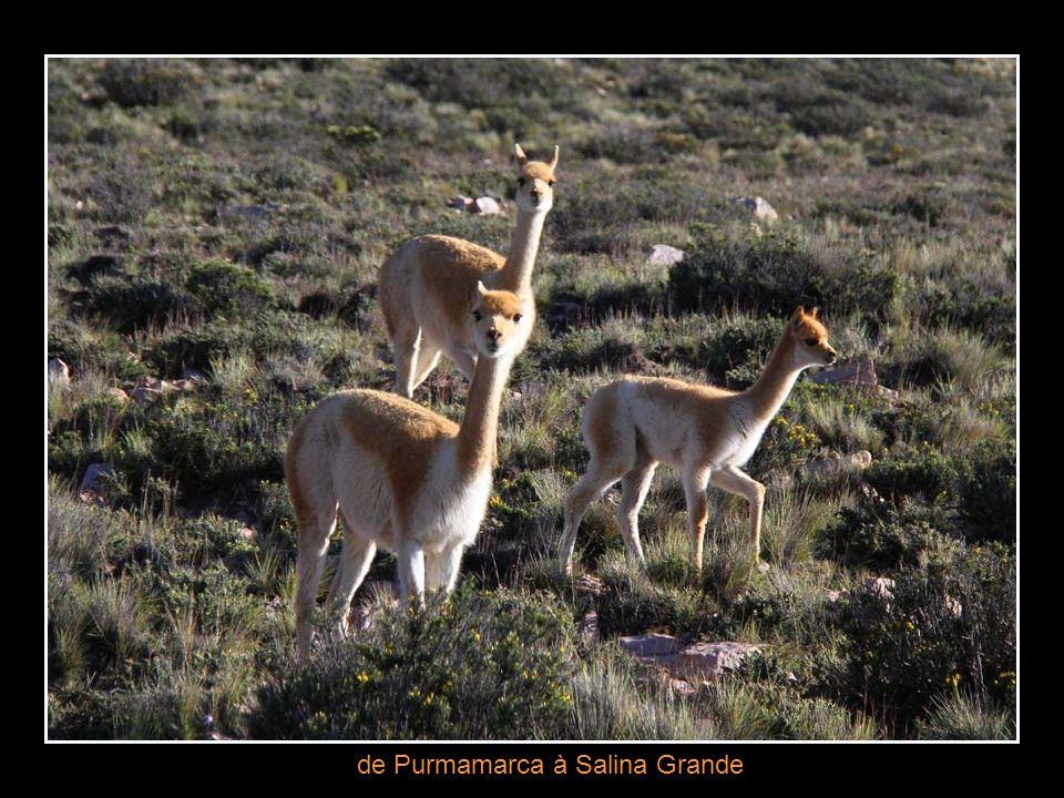 Route de Purmamarca à Salinas Grandes