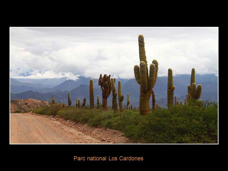 De Cachi au Parc National Los Cardones