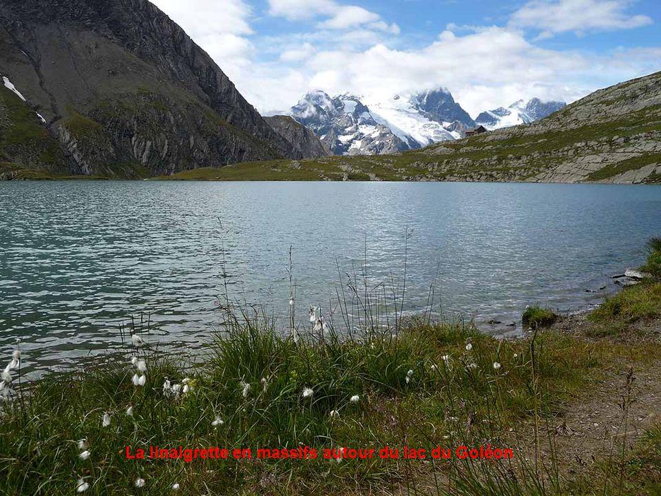 La Meije en arrière plan du lac du Goléon