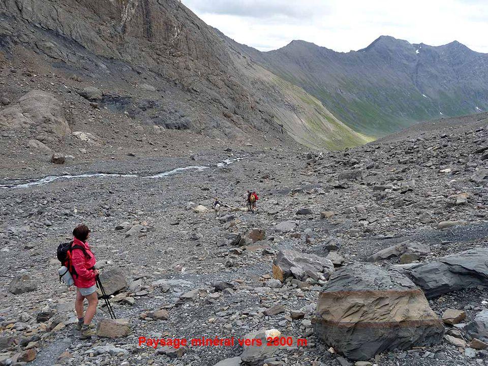 Les briataux au pied du col du Lombard (3092 m)