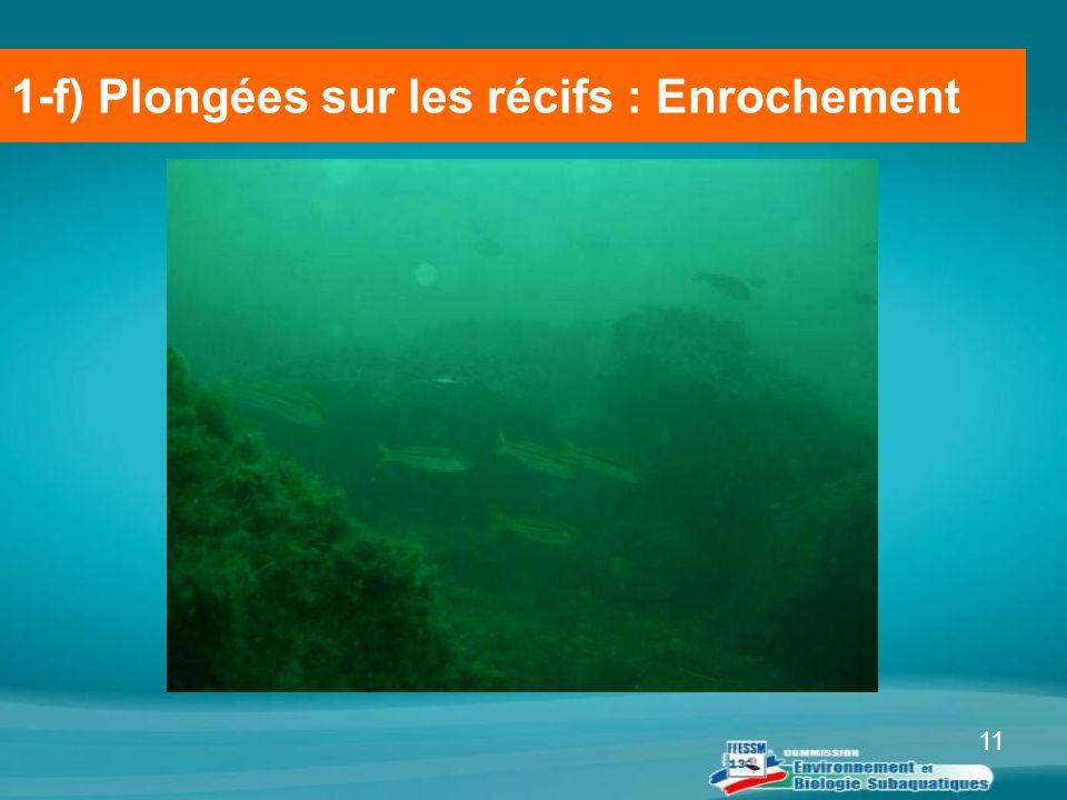11 1-f) Plongées sur les récifs : Enrochement