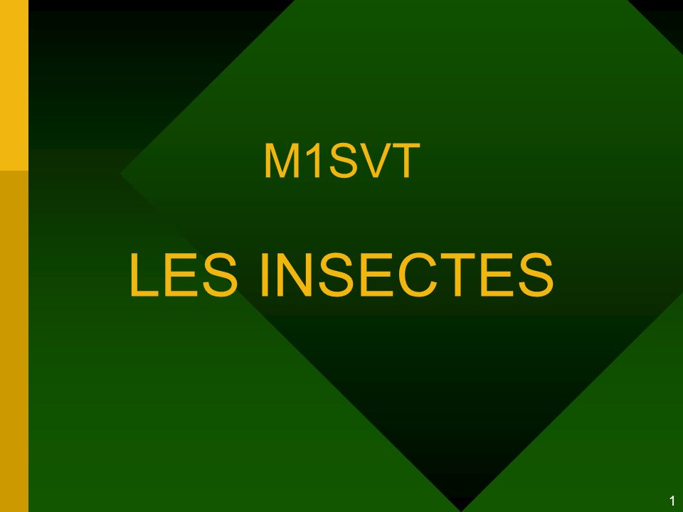 1 M1SVT LES INSECTES