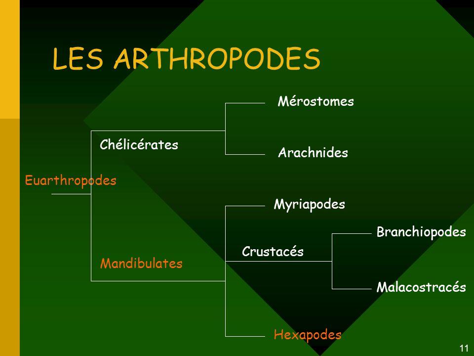 11 LES ARTHROPODES Euarthropodes Mérostomes Arachnides Myriapodes Hexapodes Chélicérates Mandibulates Crustacés Branchiopodes Malacostracés
