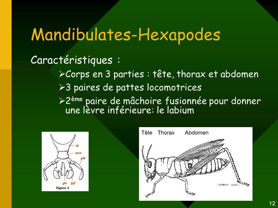 12 Mandibulates-Hexapodes Caractéristiques :  Corps en 3 parties : tête, thorax et abdomen  3 paires de pattes locomotrices  2 ème paire de mâchoir