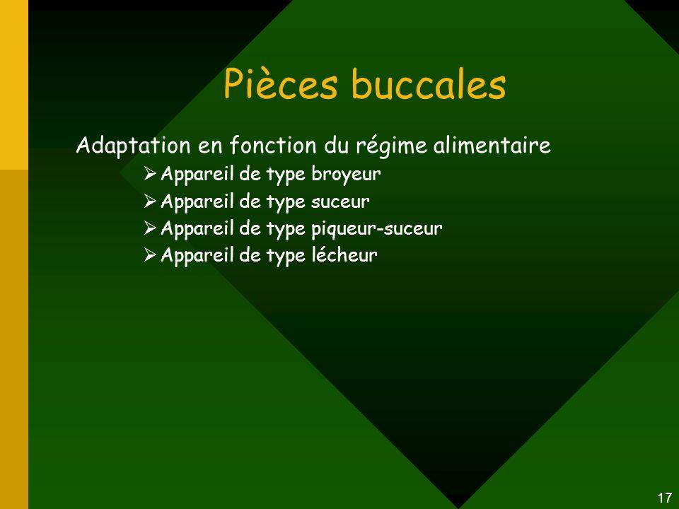 17 Pièces buccales Adaptation en fonction du régime alimentaire  Appareil de type broyeur  Appareil de type suceur  Appareil de type piqueur-suceur