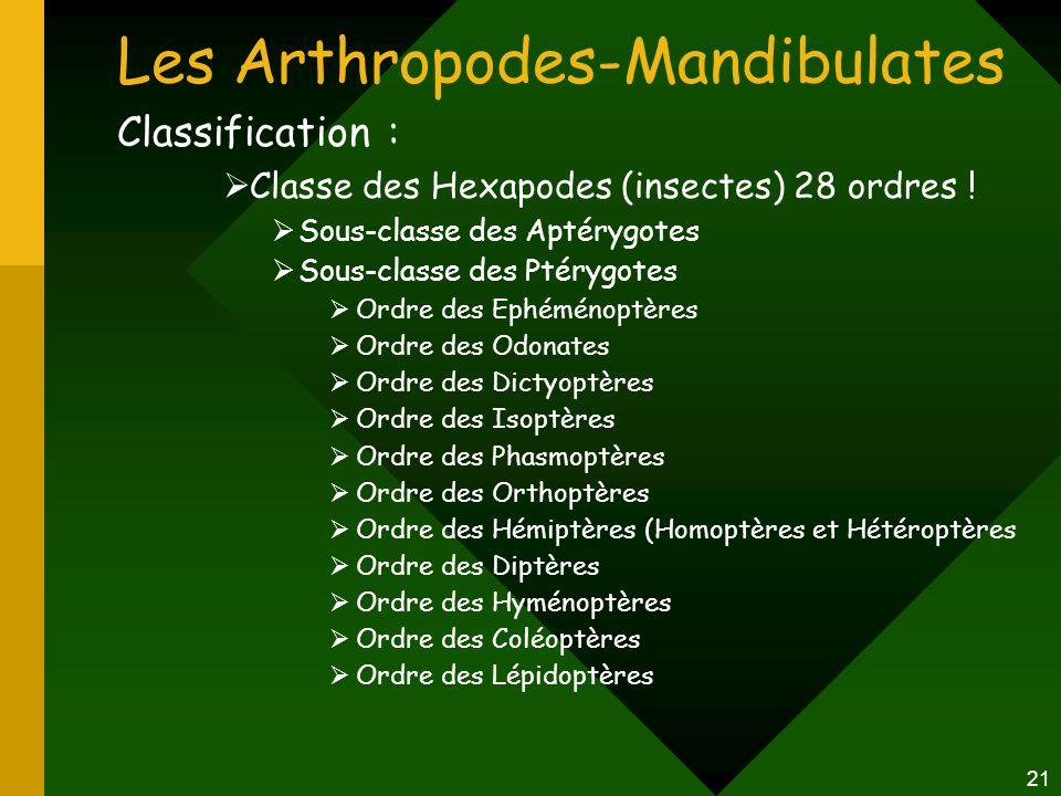21 Les Arthropodes-Mandibulates Classification :  Classe des Hexapodes (insectes) 28 ordres !  Sous-classe des Aptérygotes  Sous-classe des Ptérygo
