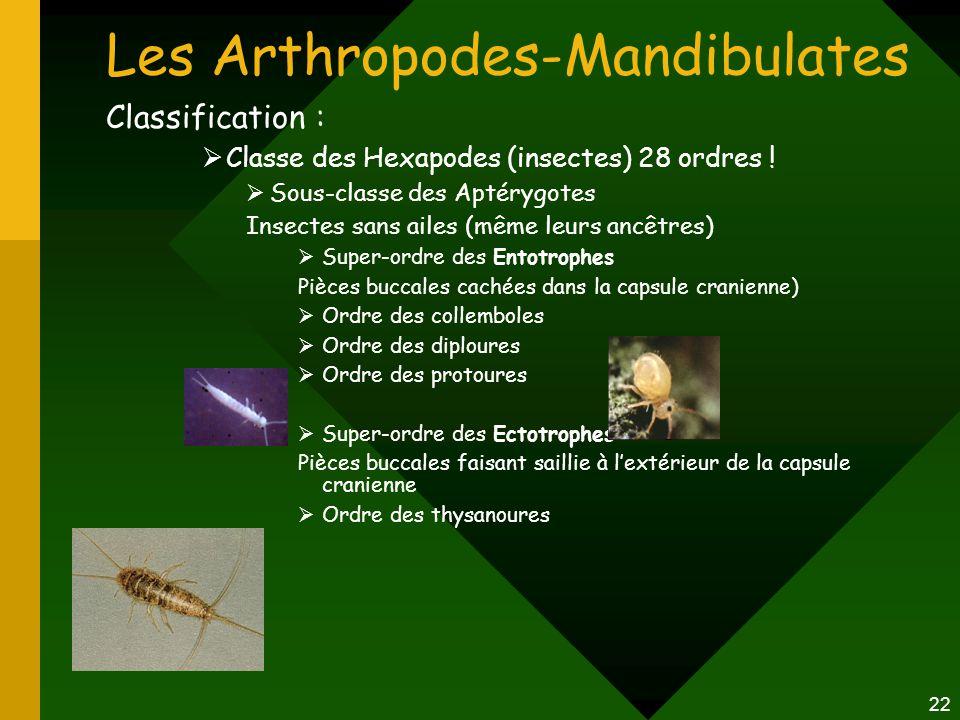 22 Les Arthropodes-Mandibulates Classification :  Classe des Hexapodes (insectes) 28 ordres !  Sous-classe des Aptérygotes Insectes sans ailes (même