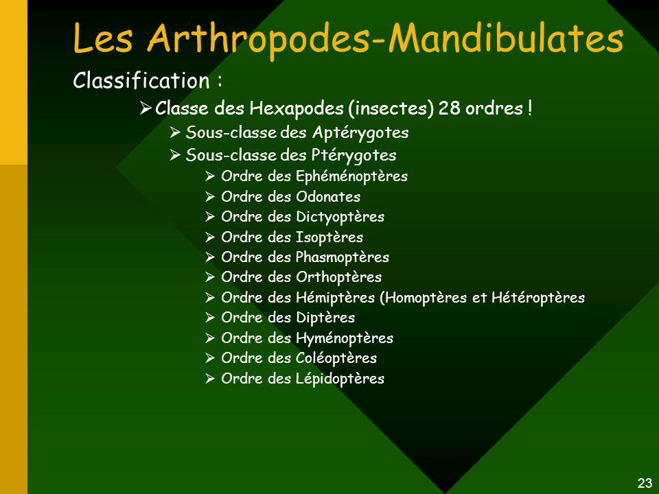23 Les Arthropodes-Mandibulates Classification :  Classe des Hexapodes (insectes) 28 ordres !  Sous-classe des Aptérygotes  Sous-classe des Ptérygo