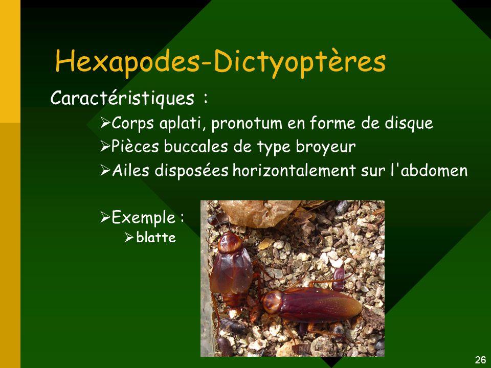 26 Hexapodes-Dictyoptères Caractéristiques :  Corps aplati, pronotum en forme de disque  Pièces buccales de type broyeur  Ailes disposées horizonta