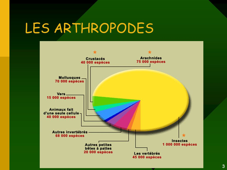 3 LES ARTHROPODES * * *