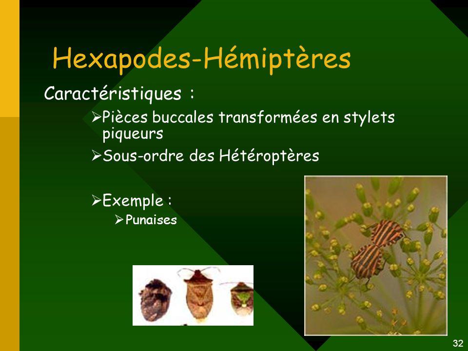 32 Hexapodes-Hémiptères Caractéristiques :  Pièces buccales transformées en stylets piqueurs  Sous-ordre des Hétéroptères  Exemple :  Punaises