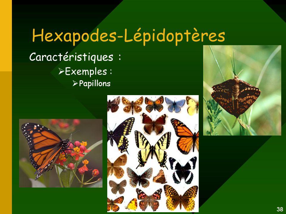 38 Hexapodes-Lépidoptères Caractéristiques :  Exemples :  Papillons