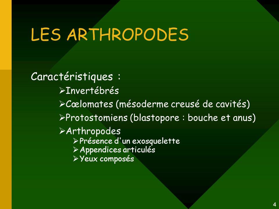 4 Caractéristiques :  Invertébrés  Cœlomates (mésoderme creusé de cavités)  Protostomiens (blastopore : bouche et anus)  Arthropodes  Présence d'