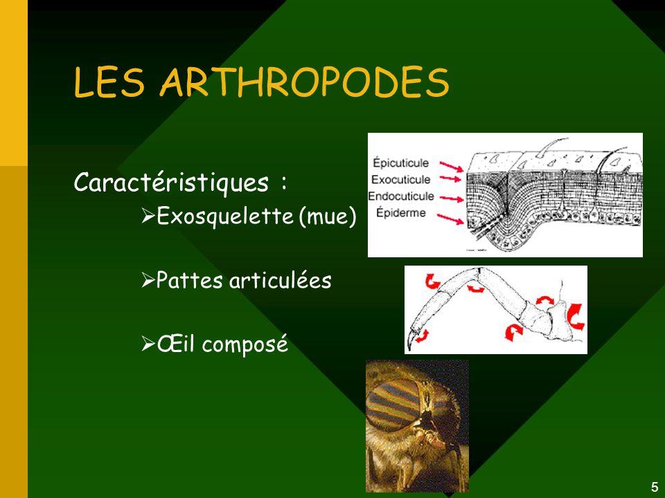 5 LES ARTHROPODES Caractéristiques :  Exosquelette (mue)  Pattes articulées  Œil composé