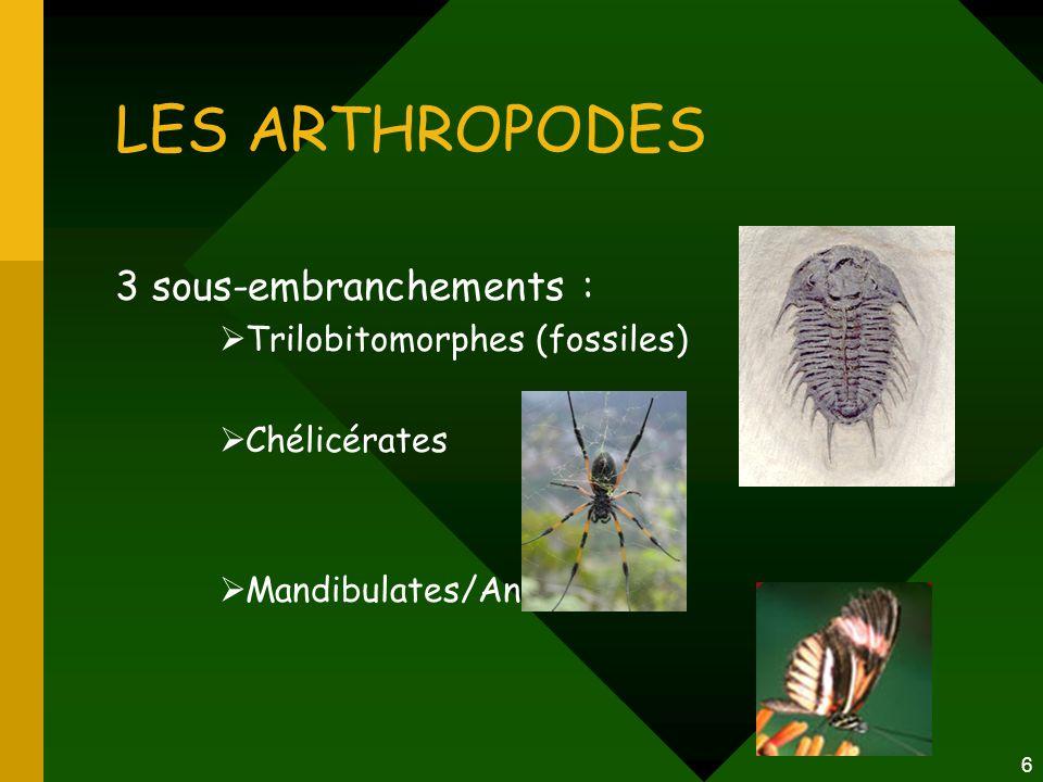 6 LES ARTHROPODES 3 sous-embranchements :  Trilobitomorphes (fossiles)  Chélicérates  Mandibulates/Antennates