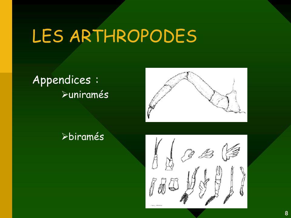 8 LES ARTHROPODES Appendices :  uniramés  biramés
