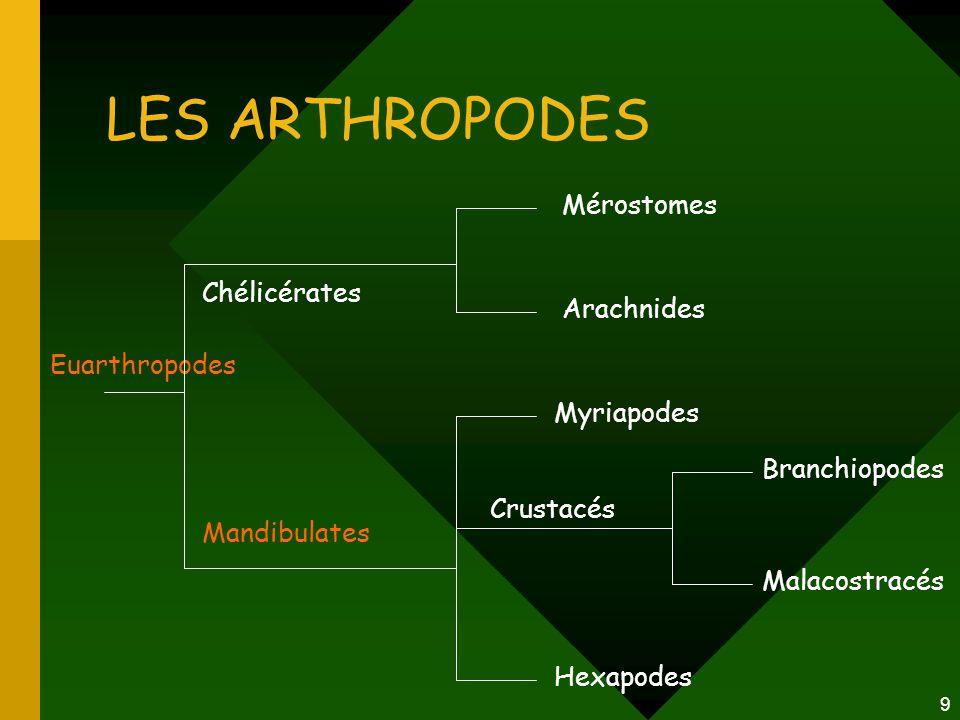 9 LES ARTHROPODES Euarthropodes Mérostomes Arachnides Myriapodes Hexapodes Chélicérates Mandibulates Crustacés Branchiopodes Malacostracés