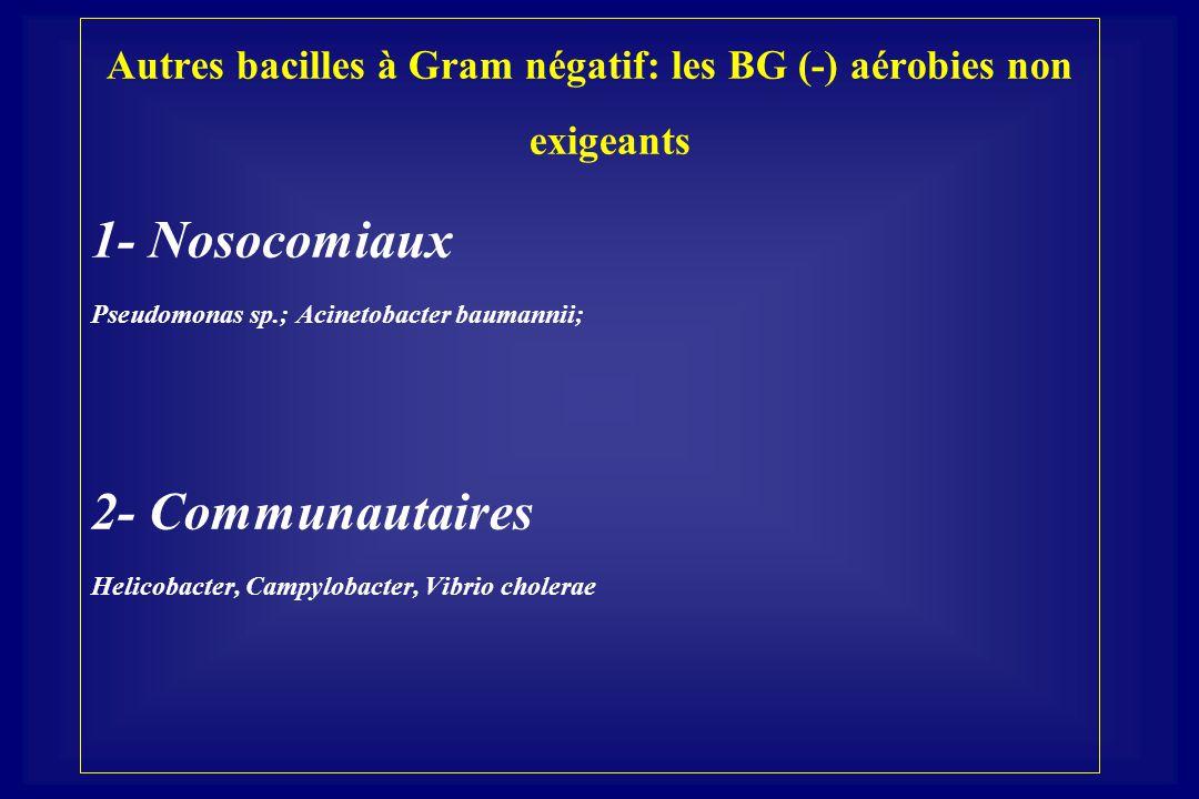 Autres bacilles à Gram négatif: les BG (-) aérobies non exigeants 1- Nosocomiaux Pseudomonas sp.; Acinetobacter baumannii; 2- Communautaires Helicobac