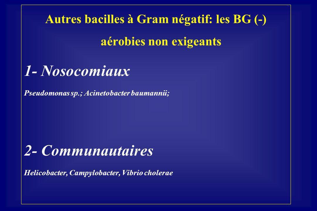 Autres bacilles à Gram négatif: les BG (-) aérobies non exigeants 1- Nosocomiaux Pseudomonas sp.; Acinetobacter baumannii; 2- Communautaires Helicobacter, Campylobacter, Vibrio cholerae