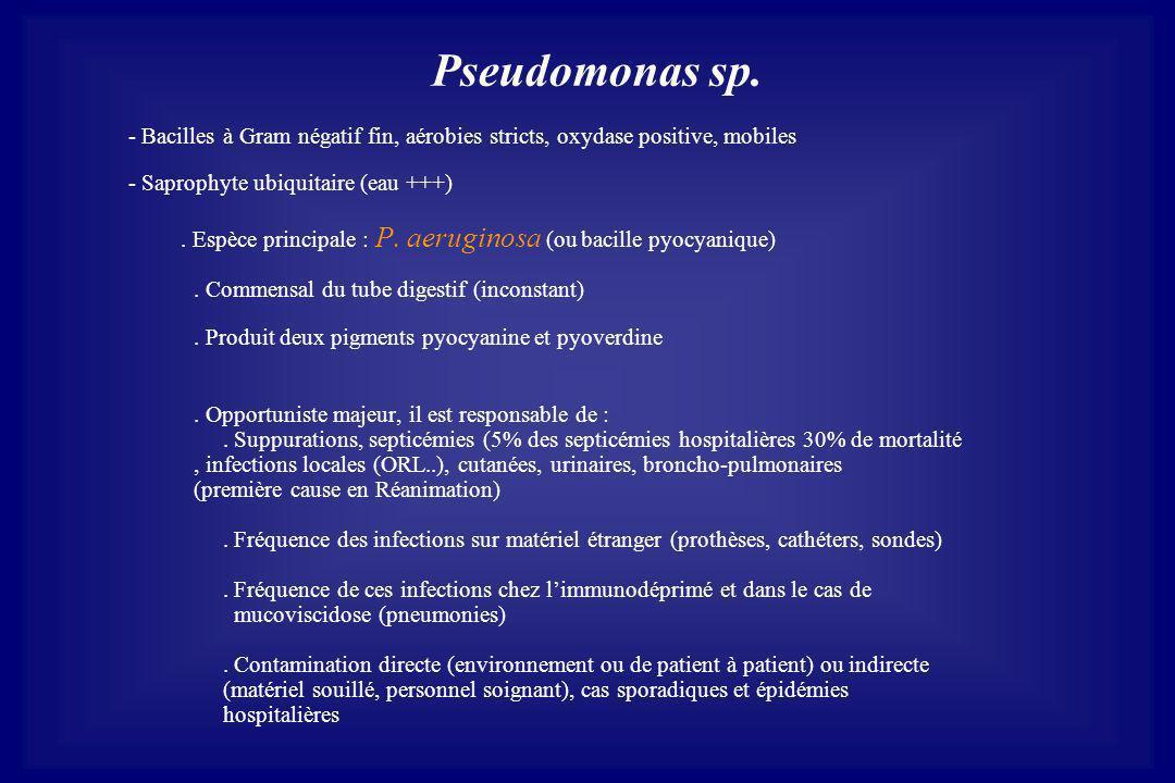 Pseudomonas sp. - Bacilles à Gram négatif fin, aérobies stricts, oxydase positive, mobiles - Saprophyte ubiquitaire (eau +++). Espèce principale : P.