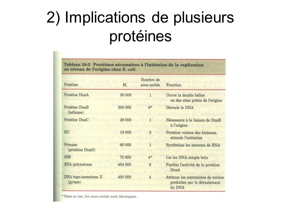 2) Implications de plusieurs protéines