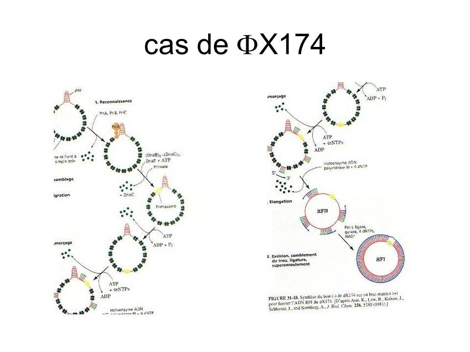 cas de  X174