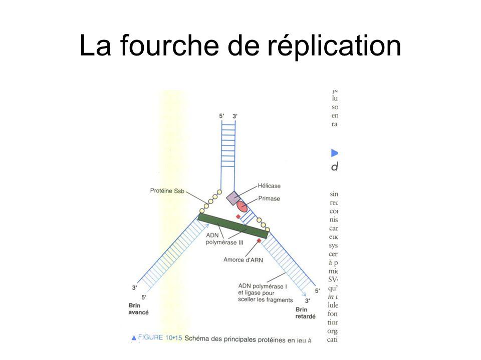 Réparation par excision d'un nucléotide