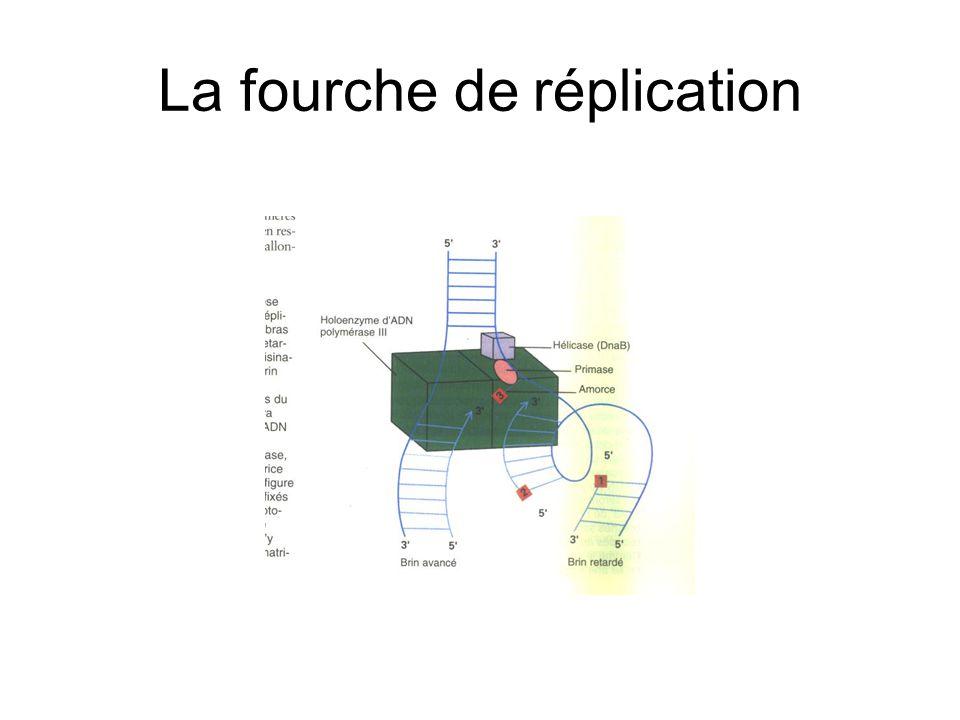 Réparation par recombinaison